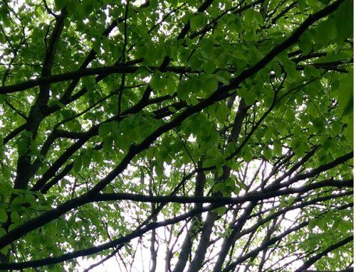 Do lesa slesníkem