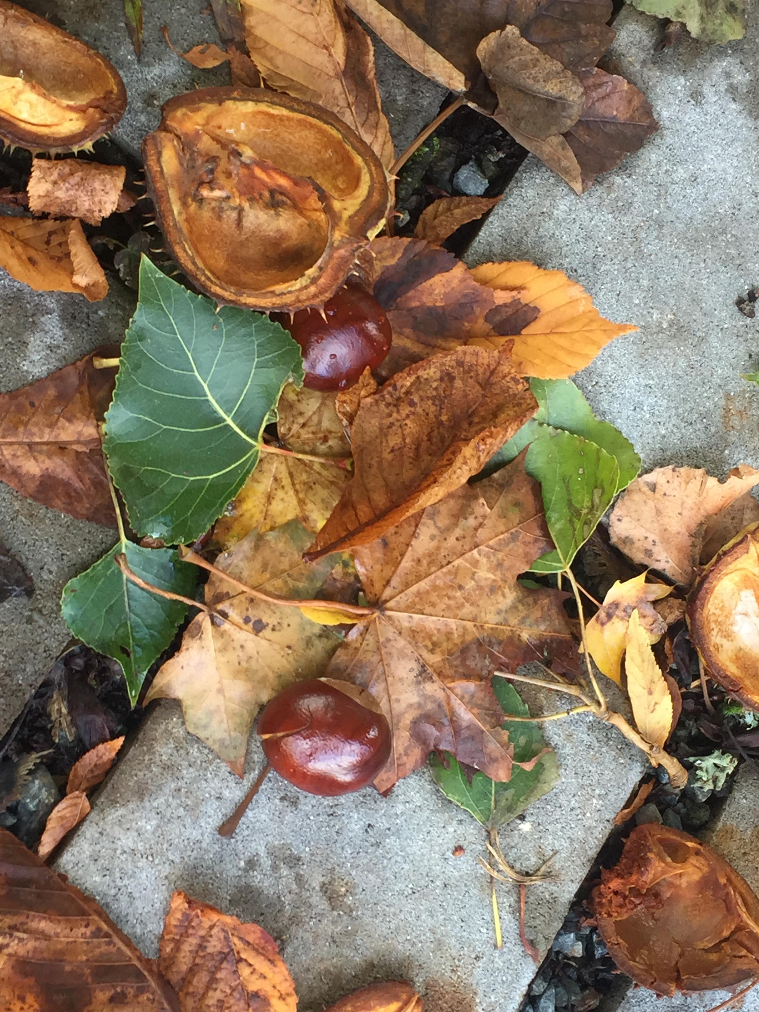 Podzim v 1. a 2. ročníku